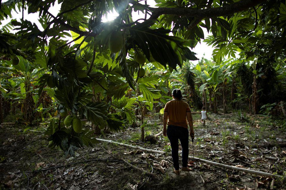 Гондурас и человек