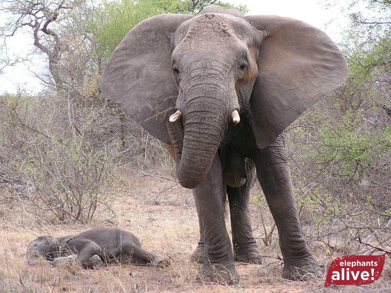 #Эхо117: про слонов и LG